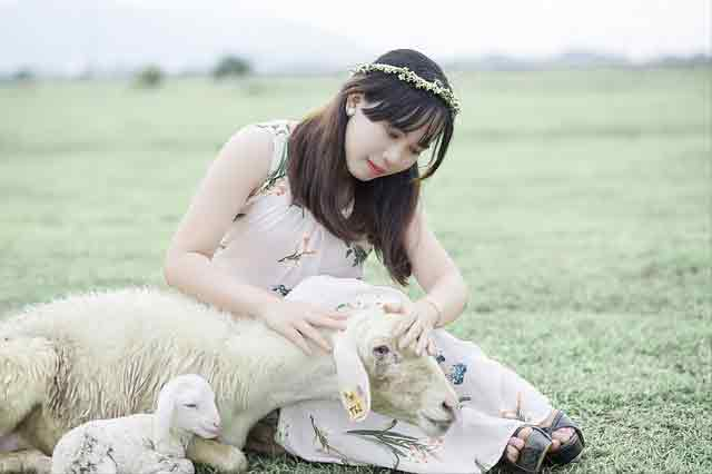 bring your Vietnamese wife back home: Vietnamese girl with a sheep